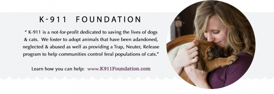 k911-foundation-rescuing-animals-in-need