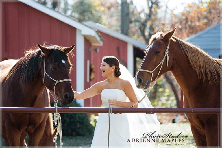 bride horses red barn